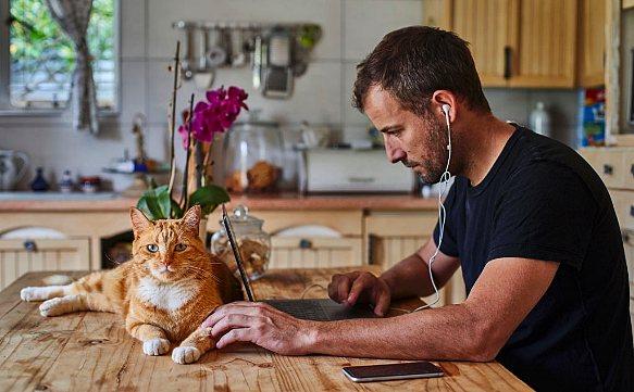 На что следует обратить внимание, когда вы отправляетесь в отпуск с кошкой